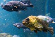 Ryby w jeziorze